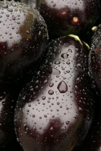Eggplants in the rain