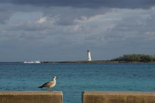 Seagull tourism