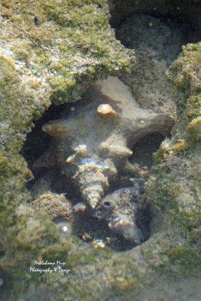 Hidden treasures at low tide