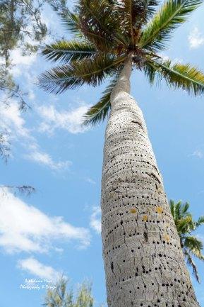 Woody's favorite Tree