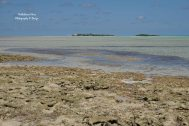 Low Tide at Sea View Villas