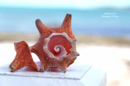 Your Inner Conch