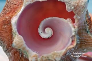 The Inward Spiral