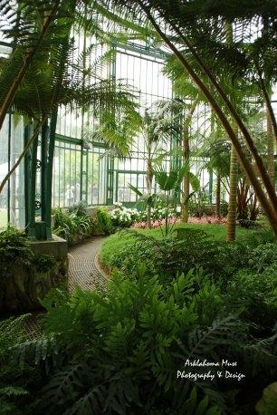 Tropical Room