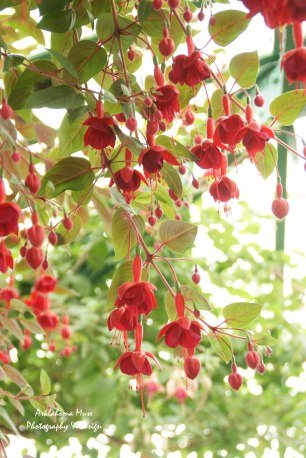 Pretty Canopy