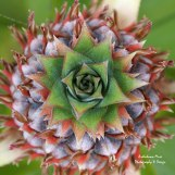 https://fineartamerica.com/featured/pineapple-squared-brandy-herren.html