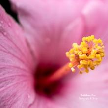https://pixels.com/featured/hello-hibiscus-brandy-herren.html