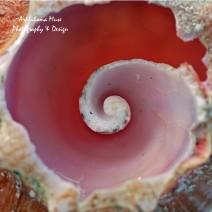 https://fineartamerica.com/featured/inner-spiral-brandy-herren.html?newartwork=true