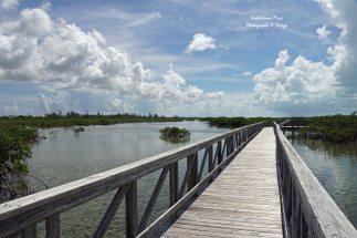 Boardwalk on the Pond