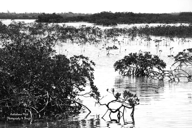 Mangroves in Black and White