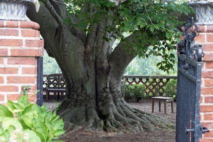 My new favorite tree...