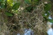Moss, moss everywhere