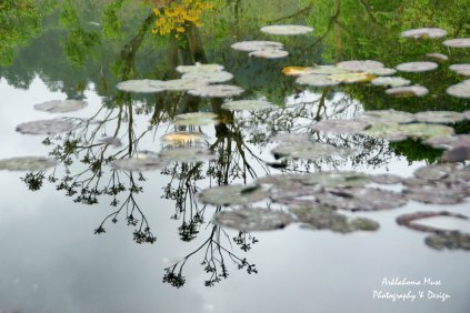 Lily Pond Reflections 3