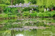 Lily Pond Reflections 4