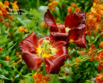 Monet's Gardens 6
