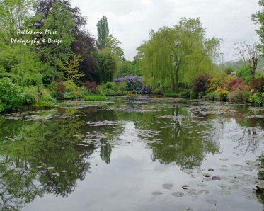 Lily Pond Views 2