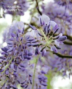 Monet's Gardens 7