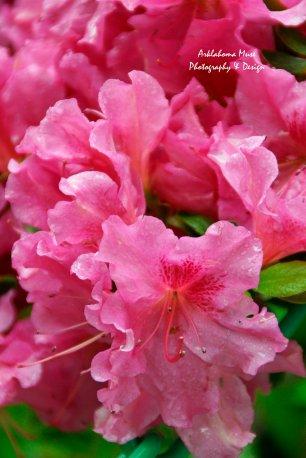 Monet's Gardens 8