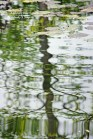 Lily Pond Reflections 7
