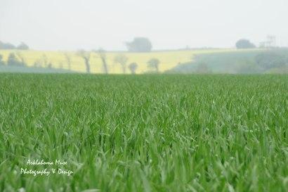 From battlefields to farm fields