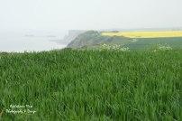 Coastline at Longues-sur-Mer